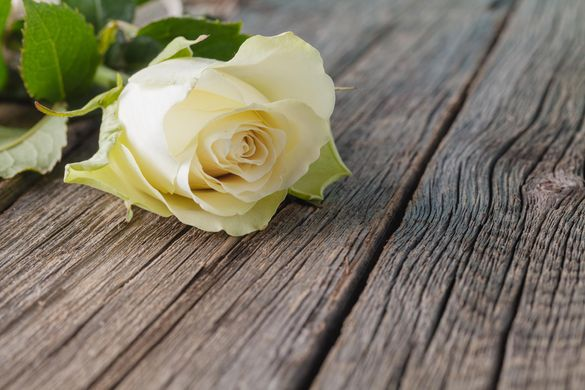 white rose on a wood table